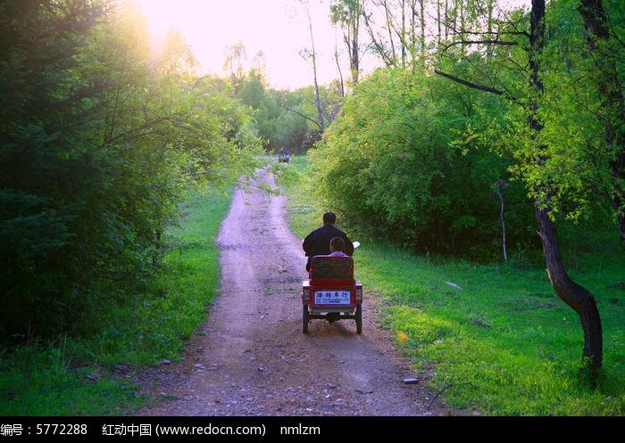 大树林小路骑三轮车的人