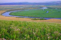 额尔古纳河河岸野花盛开