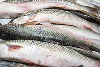 海梭鱼食材原料