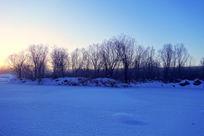 林海雪原树林日出时的风景