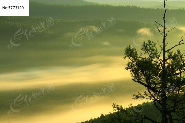 森林云海朝阳图片,高清大图_森林树林素材