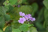 盛开的粉紫色花朵