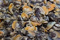 海鲜食材贝肉