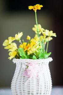 一盆黄色的花