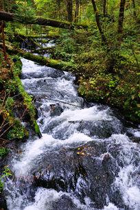长白山丰沛的小溪