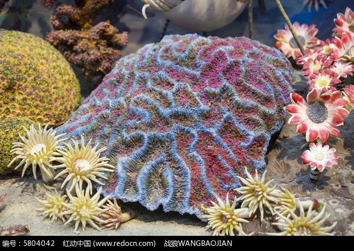 海洋珊瑚标本图片,高清大图_水中动物素材