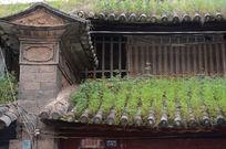 屋顶长满草的老房子
