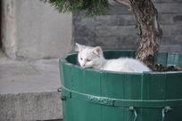 院子里的流浪猫