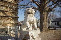 真觉寺金刚宝座塔前的石狮子