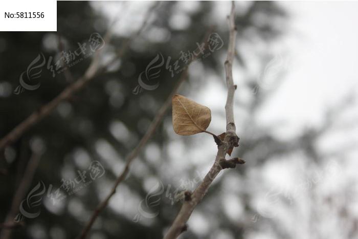 树叶子手工制作动物