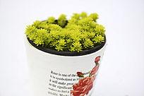 浅黄色小花形多肉植物