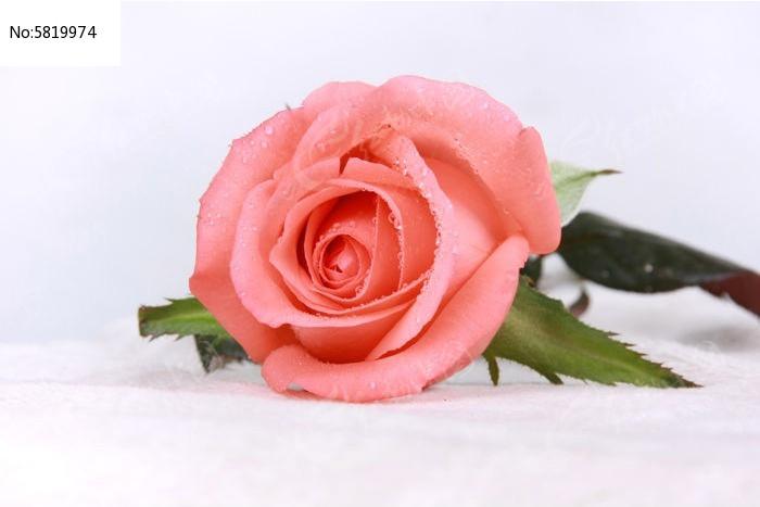 一支玫瑰花图片,高清大图