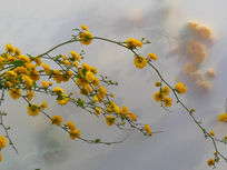 布子上的花朵
