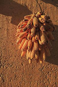 阳光照射着墙上的玉米棒