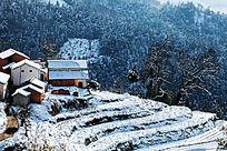 大雪后的民居与梯田