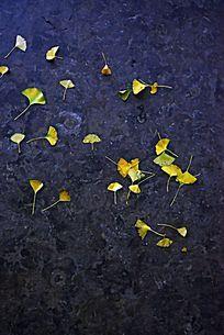 地面上散落的金黄色银杏树叶