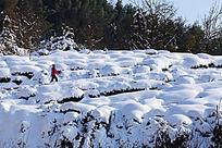 红衣女孩行进在雪地里