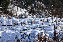 驴友在雪地观雪