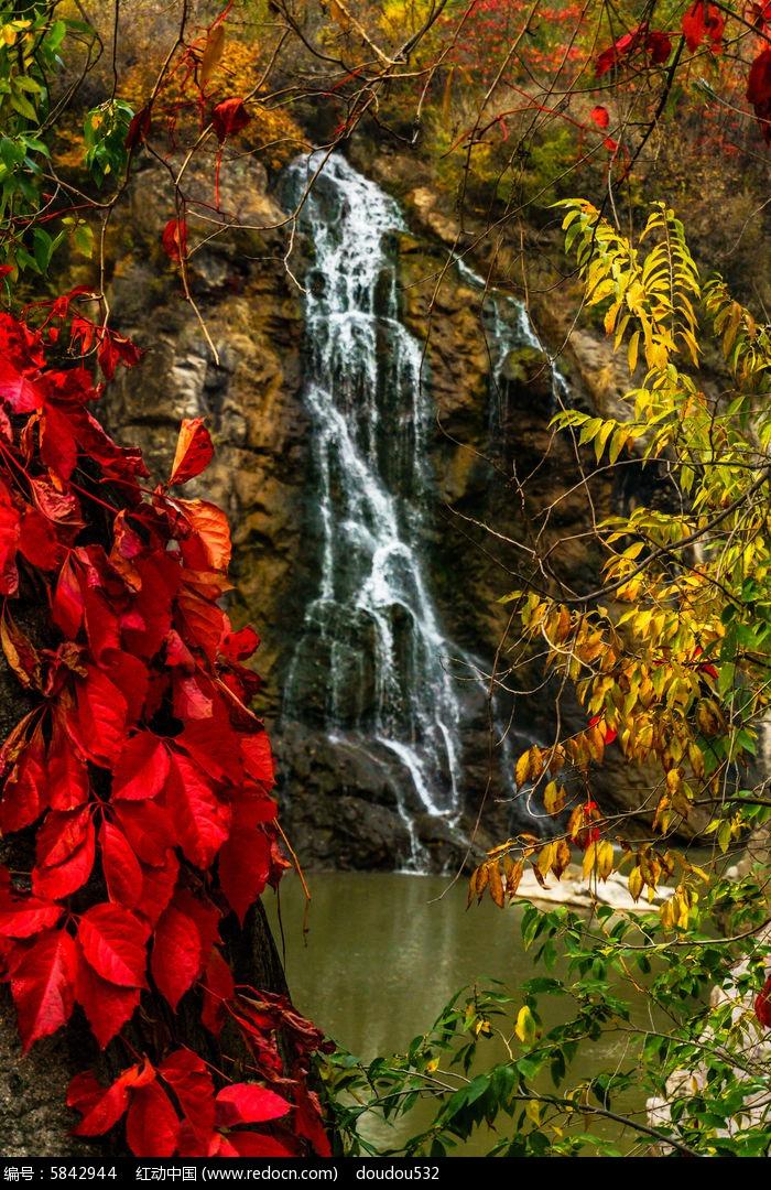 秋天的红叶图片,高清大图