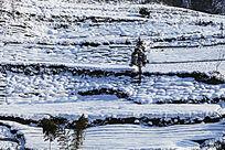 屹立在积雪中的小树与毛竹