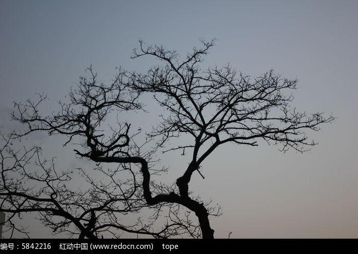 造型树木图片图片