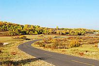 金色草原中的公路