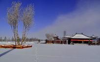 满洲里雪地里的树