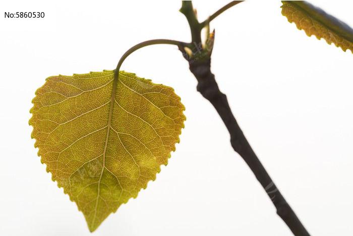 原创摄影图 动物植物 树木枝叶 一片黄色树叶  请您分享: 红动网提供