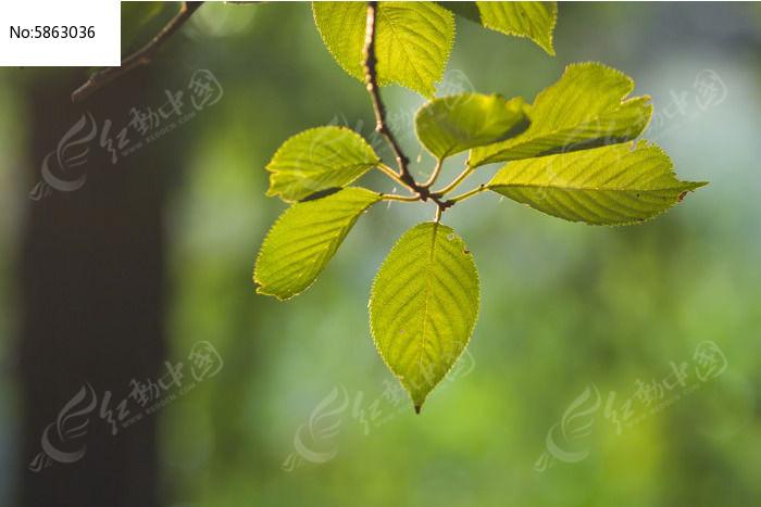 原创摄影图 动物植物 树木枝叶 清新的树叶