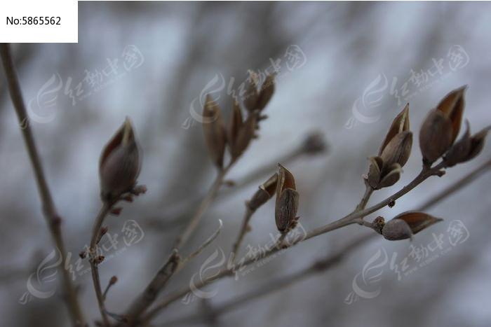 枯萎的植物图片