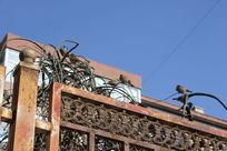 围栏上的麻雀图片