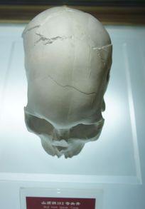 山顶洞头骨