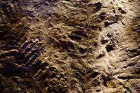 植物叶子纹理化石