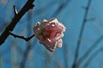 漂亮的梅花