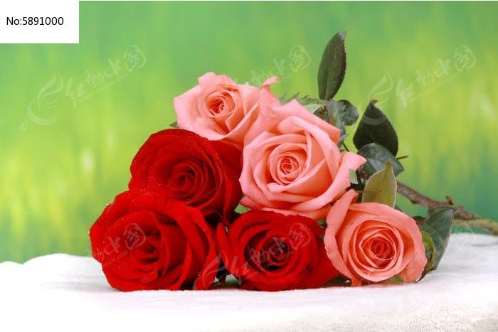 原创摄影图 动物植物 花卉花草 玫瑰鲜花