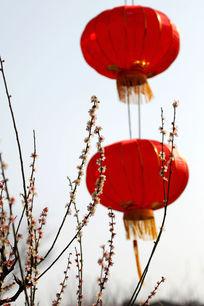 红灯笼下的梅花