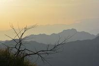 山上的树枝剪影图片素材