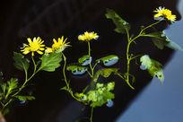 漂浮于水中的花朵
