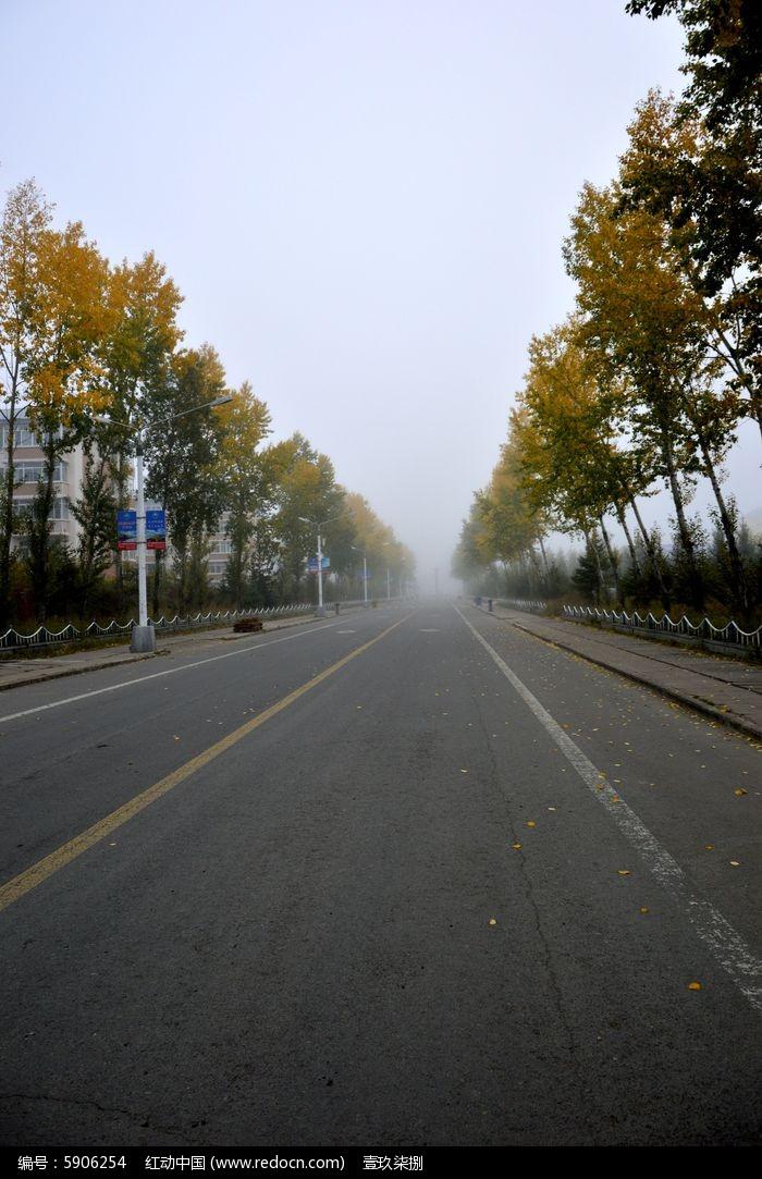 原创摄影图 动物植物 树木枝叶 清晨小镇街道