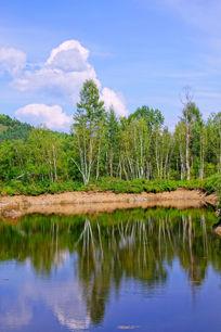 湖泊桦林风景