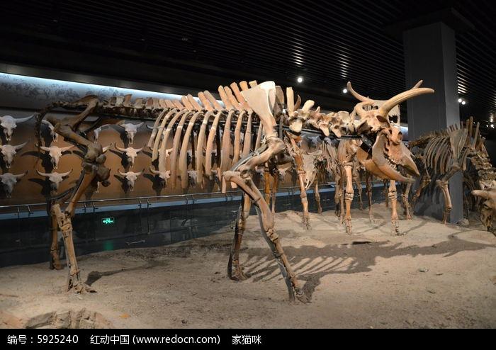动物走起来的动态骨骼