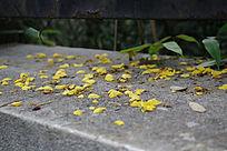 散落地面的花瓣