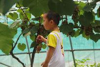 葡萄园中的男孩
