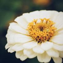 微距下的花