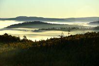 森林大美在清晨