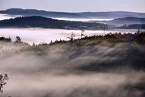 原始林晨雾