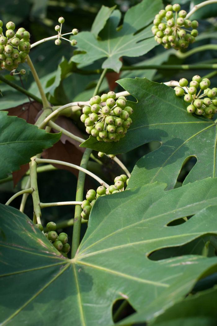 原创摄影图 动物植物 树木枝叶 果实  请您分享: 红动网提供树木枝叶