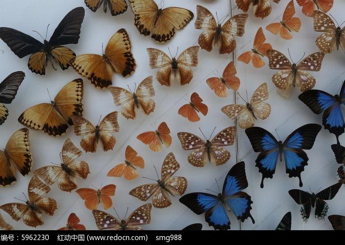 原创摄影图 动物植物 昆虫世界 蝴蝶群图案