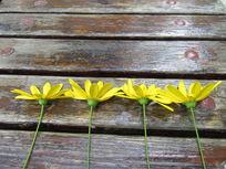4朵整齐的花