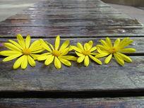 摆在木凳上的花
